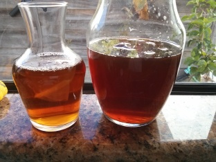 Two glass containers with kombucha cultures.