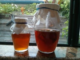 Two glass containers containing kombucha