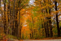 picture showing Fall foliage